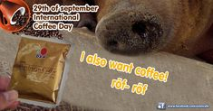 Happy International Coffee Day!  #coffee #coffeetime #coffeelovers #international #coffeeday #kávé #kavevilagnapja #kávévilágnapja #tasty #happyday #happytime #worldwide #hungary Healthy Life, Coffee, Instagram, Kaffee, Healthy Living, Cup Of Coffee