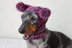 The Diverse Dachshund Breed - Champion Dogs Dachshund Breed, Long Haired Dachshund, Mini Dachshund, Dachshund Quotes, Dapple Dachshund, Dachshund Gifts, Small Dog Breeds, Small Dogs, Best Apartment Dogs