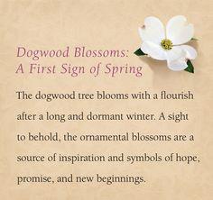 The Dogwood, inspiring many designs #jamesavery #jewelry