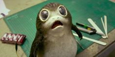 """Star Wars Creatures And Characters, Ranked By Cuteness    Recently, Star Wars: The Last Jedi revealed some of the new alien creatures that will be part of the newest film in the franchise. The internet met them with a collective """"awwwww.""""   http://www.cinemablend.com/news/1694480/star-wars-creatures-and-characters-ranked-by-cuteness"""