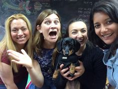 Team Scream!!  Peggy and her homies  #Dachshund #OfficeDog