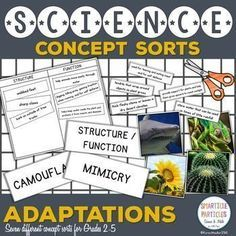 Hands on sorting activities for learning about adaptations. Perfect for second, third, fourth, and fifth grade.