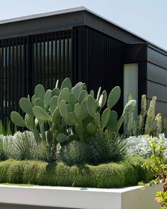 Dry Garden, Garden Shop, Garden Beds, Home And Garden, Landscape Architecture Design, Garden Landscape Design, Outdoor Landscaping, Outdoor Gardens, Rooftop Gardens