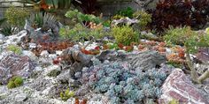 All Plants, Floral Style, Plein Air, Outdoor Gardens, Lush, Succulents, Passion, Deco, Gardens