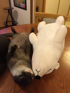 Otterly adorable! He's got himself his own stuffed animal!