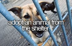 Adopt an animal from the shelter ✔️