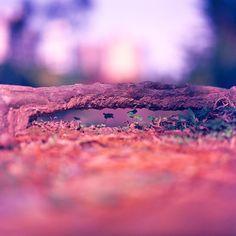 Ant bridge - Kodak EKTACHROME 100VS (120) - http://emulsive.org/photography/medium-format/ant-bridge-kodak-ektachrome-100vs-120