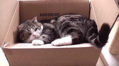 残念だが、猫はあなたをそれほど必要としていない(研究結果)