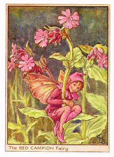 "Cicely Barker's Fairy Print - ""THE RED CAMPION FAIRY"" - Children's Lithogrpah - c1935"