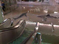 Shark Week in Union Station