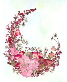 pressed flower art by Liming - amazing website