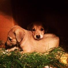 Homes for orphaned puppies needed urgently #Delhi http://dogwithblog.in/adopt-a-dog-india … @kaalicharan Call 9810929789 or 9873077398.