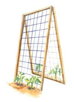 Weekend DIY: A-frame Trellis | An A-frame trellis gives tomatoes or squash plenty of room to climb—and at the end of the season, can be folded flat for storage. Constructing one requires only some basic hardware-store supplies and an hour or so: Make the 8-foot-long frames from 2-by-2s. Reinforce the corners with metal braces, then link the two sections together with 3-inch cabinet hinges. Finally, use fence staples to attach 6-inch wire mesh to the frame.