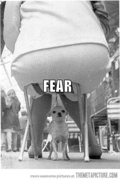 Haha. Thts how my dog feels around big animals or people