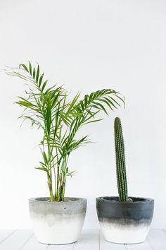 #Palme #PflanzenderMonat #Januar Für mehr Informationen über #Palmen, können Sie unsere Webseite anschauen! www.heyl.nl