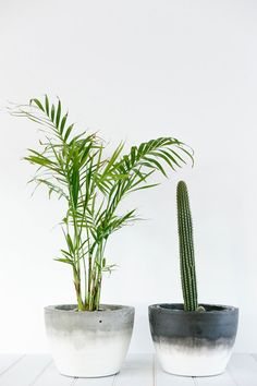 Concrete planters- Menos es más! !