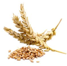 What is gluten-free? What foods contain gluten? What foods are gluten-free? Is oatmeal gluten-free? What Is Gluten Free, Gluten Free Diet, Gluten Free Recipes, Dairy Free, Lactose Free, Paleo Diet, Grain Free, Yummy Recipes, Healthy Recipes