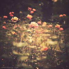 """""""La nuit, en secret, épanouit les fleurs et laisse le grand jour récolter les compliments."""" Rabindrannath Tagore"""