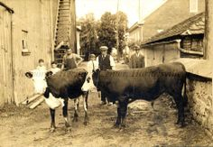 Photo of John S. Longacre and others at a cattle sale in Boyertown, Berks Co., with the old Mennonite meetinghouse in the background (at the intersection of Rts. 73 and 562; now the location of the National Penn Bank headquarters). Gift of John L. Ruth.