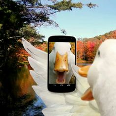 Aflac duck selfie