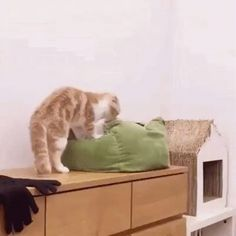 Cat invades another cat's personal space http://ift.tt/2i8E2ZV