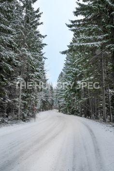 Snowy winter street / forest