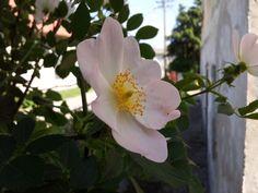 Roses  by Marko Zivanic on 500px