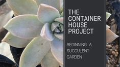 Beginning a Succulent Garden - Small Scale Engineering Propogating Plants, Wholesale Nursery, Buy Plants, Plant Nursery, Olive Tree, Propagation, Succulents Garden, Fruit Trees, Home Projects