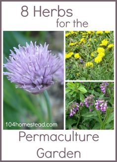 Before launching into 8 super-cool permaculture herbs, let's talk about permaculture. Permaculture is an ecological design science that is modeled after nature and used to create sustainable human settlements.