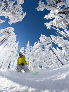 Snowboarder Going Through Trees in Powder Snow at Hoodoo Ski Resort Photographic Print