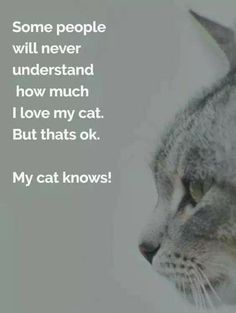 Banixx knows how much you love your cat. Animals And Pets, Funny Animals, Cute Animals, Funny Animal Pictures, Funny Photos, Crazy Cat Lady, Crazy Cats, Cute Cats, Funny Cats