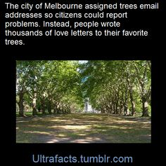 """""""The email interactions reveal the love Melburnians have for our trees,"""" Wood said. Here are some emails Arron shared.      To: Golden Elm, Tree ID 1037148      21 May 2015     I'm so sorry you're going to die soon. It makes me sad when trucks damage your low hanging branches. Are you as tired of all this construction work as we are?"""