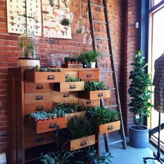 Shop: Expertly curated display of succulents and air plants. // Lonny - Glasswing #BiteSizeSeattle