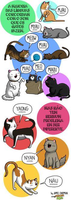 A língua dos gatos