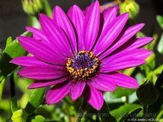 Flores de Meu Jardim..
