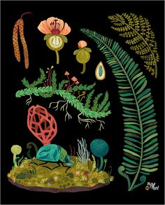 paper alligator: I've always really liked botanical charts, so I'm making my own illustrated one for Crafty Wonderland. Megan Hunt.