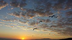 Sunset - Trip off Santa Cruz Island. Santa Cruz Island, California Beach, Real Estate, Ocean, Clouds, Sunset, Lifestyle, Outdoor, Animals