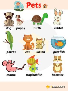 pets vocabulary, learn pet names
