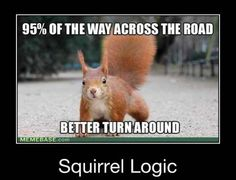squirrels have no logic!  Whatchu talkin' about?