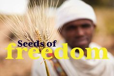 Are GMO's the answer to world hunger?  Our June #FilmClub 'Seeds of Freedom' looks at the grassroots solution that starts with a humble seed of truth…