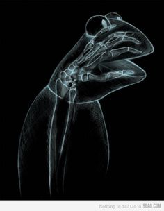 X-Ray of Kermit the Frog.