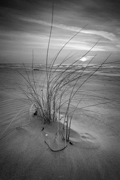 Bws Beach Black White Behangwebshopnl