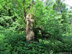 На пригорке сломленное дерево.