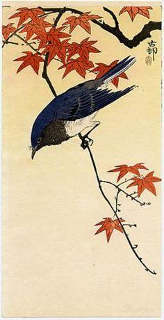 Koson, A Blue & White Flycatcher on a Maple Branch