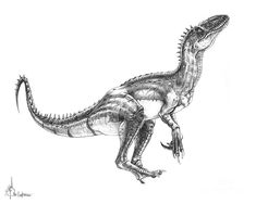 Velociraptor Drawing