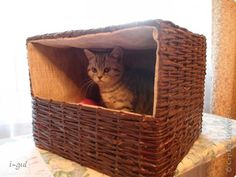 Master class Weaving: A Home for Cats Newsprint, Boxes, Cloth.  Photo 1