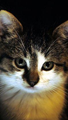 Preview kitten