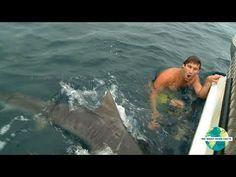 5 attacchi terrificanti degli squali!