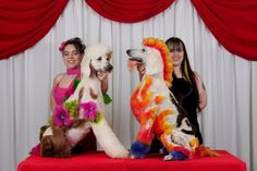 Angela Kumpe and Lori Craig Poodle Grooming, Pet Grooming, Creative Grooming, Poodle Cuts, Pet Fashion, Crazy Dog, Cute Dogs, Dog Hairstyles, Pet Supplies