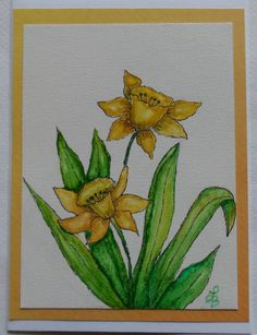 Watercolor Daffodils Card Hand Painted by LisasPaintedCrafts